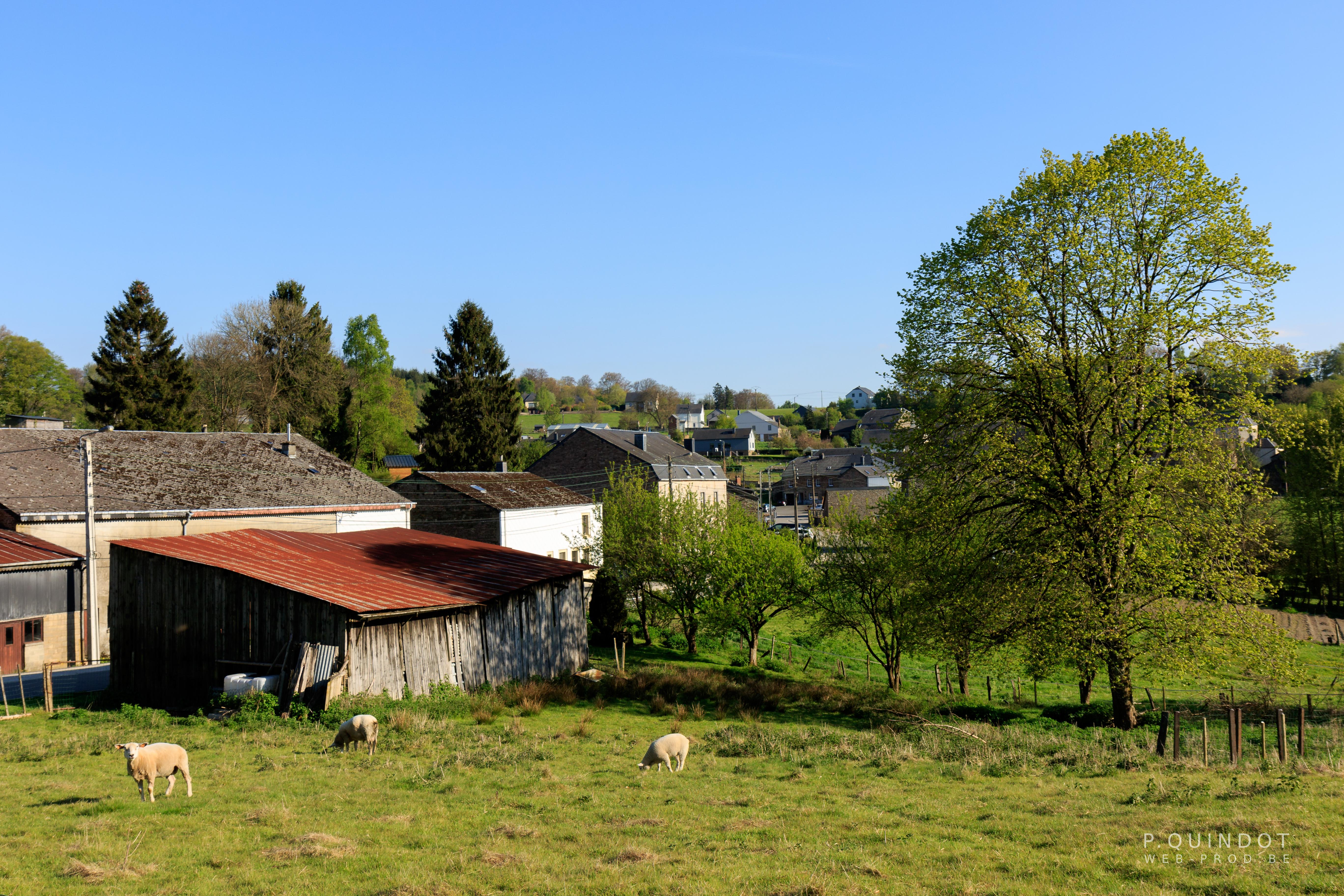 village avec arbres et animaux