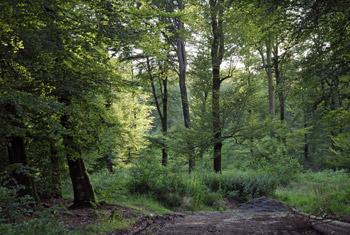 menuchenet forêt avec arbres
