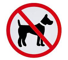 Photo 35. Château interdit aux chiens.jp