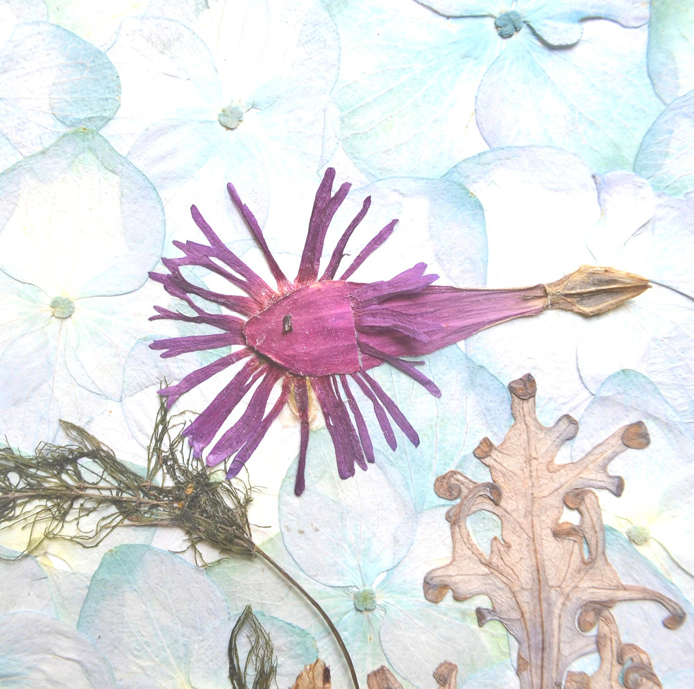 The figure of fish made of petals of Zinnia and flowers of Cooper's Ice plant for Pressed Plant Art