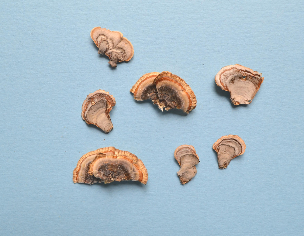 Dried small size polypore mushrooms for Pressed Plant Collage