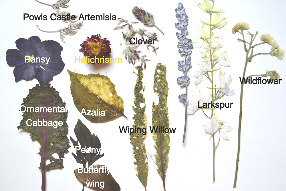 Dried under press botanical materials: petals of flowers of Pansy, helichrysum, clover; leaves of Ornamental Cabbage, wiping willow, azalea, peony; flowers of Larkspur with stems.