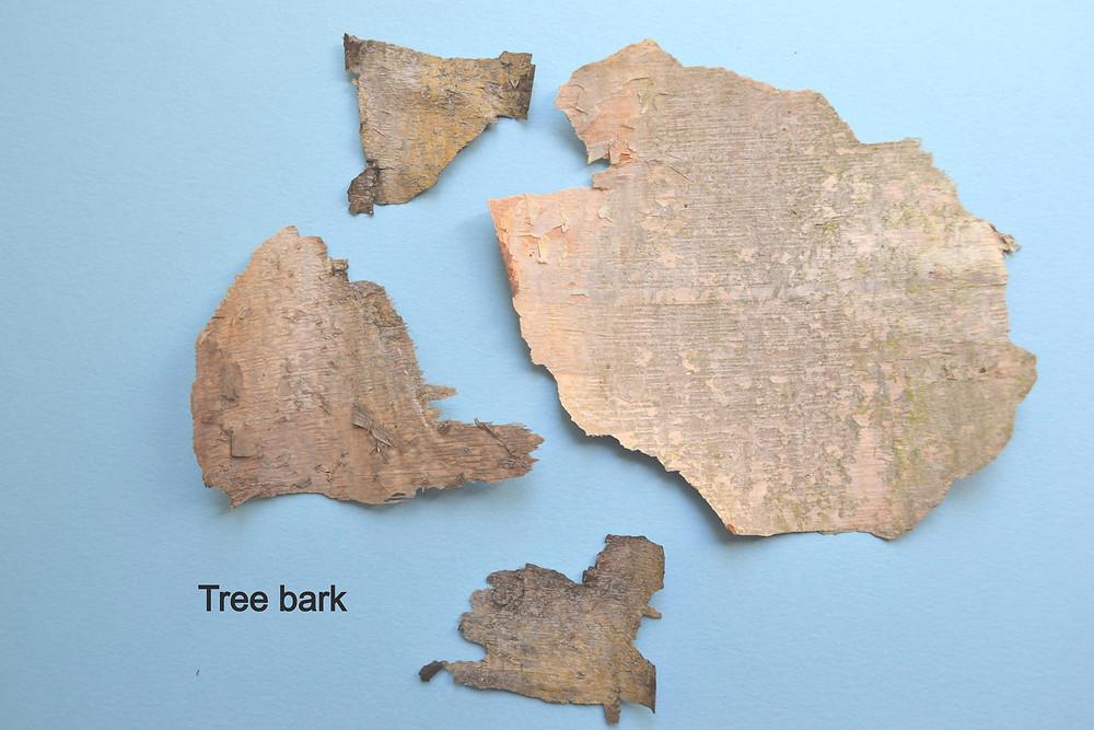 Dried peels of the tree bark