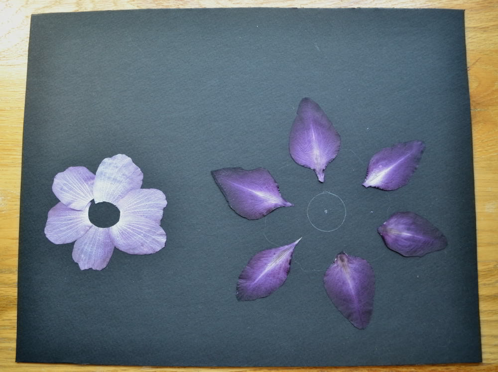 Petals of gladiolus' flowers, petals of rose of Sharon flowers.