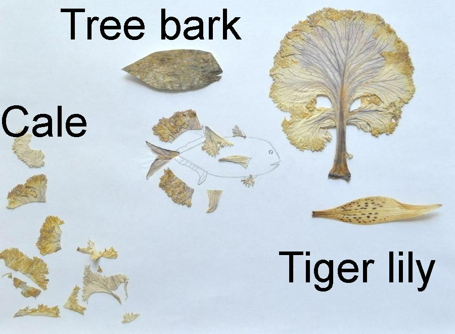 Dried pieces of Cale, tree bark, Tiger Lily.
