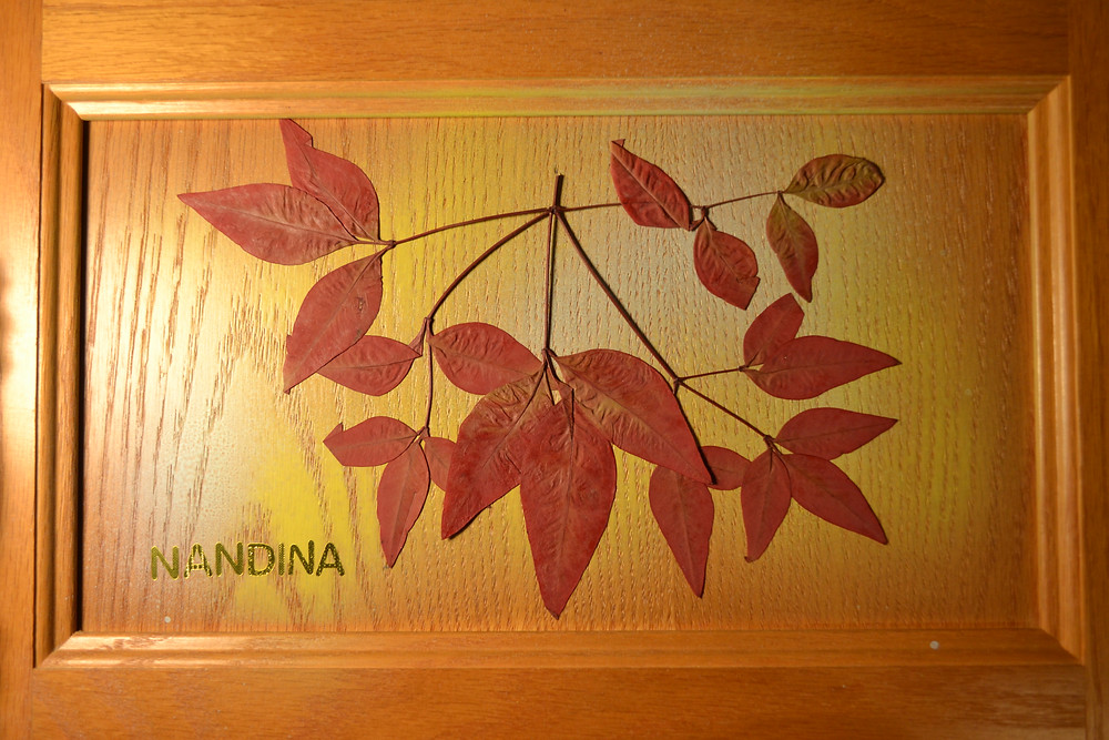 A door of a wooden cabinet with a branch of Nandina with red leaves. Pressed Flower Craft.