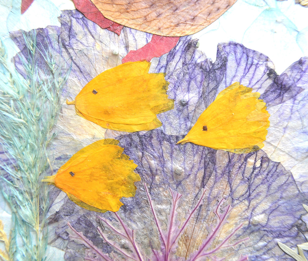 Dried under press petals of Coreopsis imitate a school of fish in the ocean on the Pressed Flower Craft