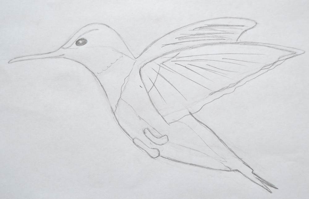 Sketch of the Hummingbird for Pressed Plant Art.