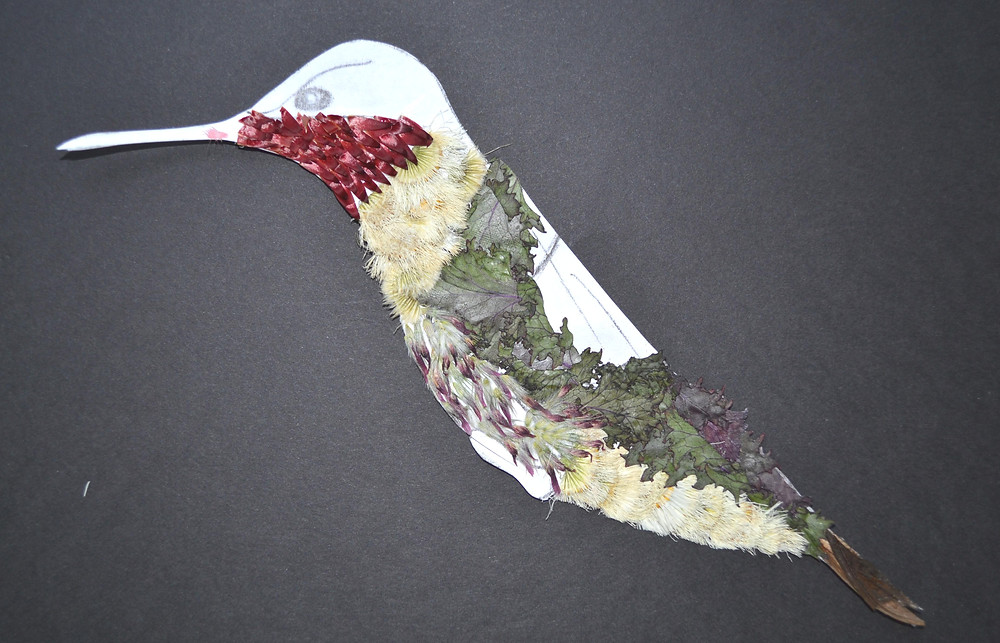 The figure of Hummingbird for Pressed Plant Art with pieces of Ornamental Cabbage, Clover, Wildflower, Helichrysum.