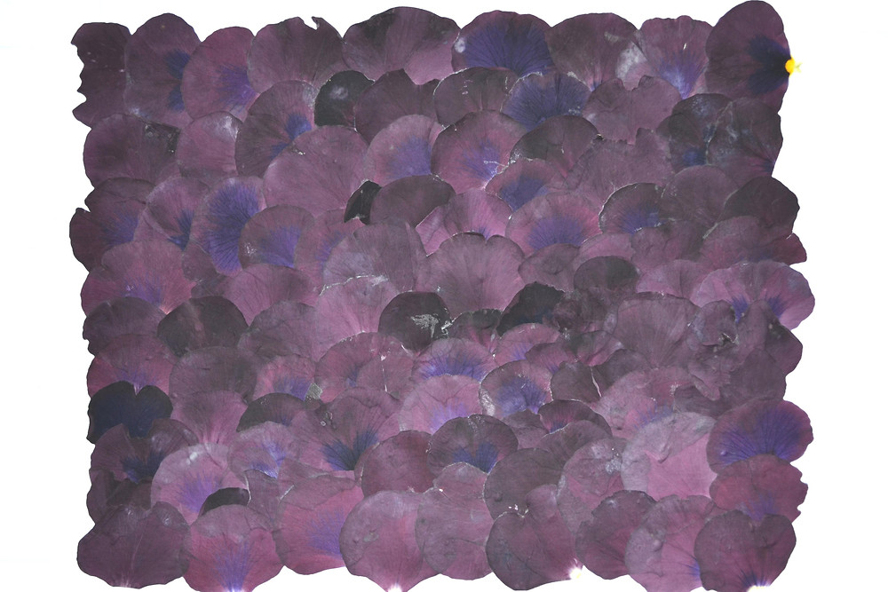 The background for the Pressed Plant Art is made of petals of Pansies purple color.