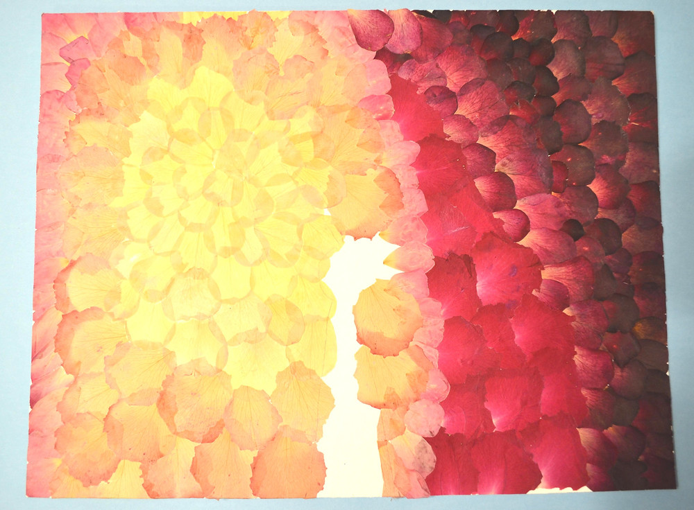 Roses' petals of six colors glued on the art board. The space for the dancer's figure is empty.