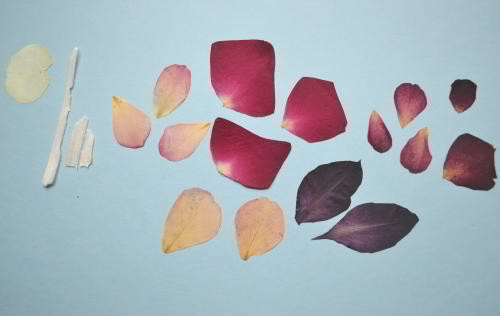 petals of roses' in six colors, petals of gladiolus, a  petal of pansy;  wrappers from the stalk of Elephant garlic.