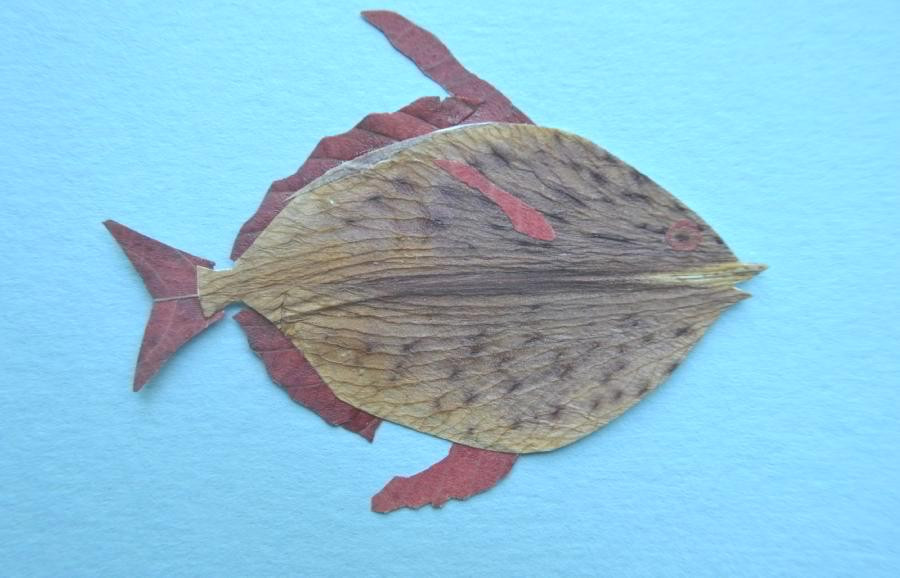 Fish for Pressed Plant Collage is made of dried under press petal of Asiatic Lily and leaves of Pistachio