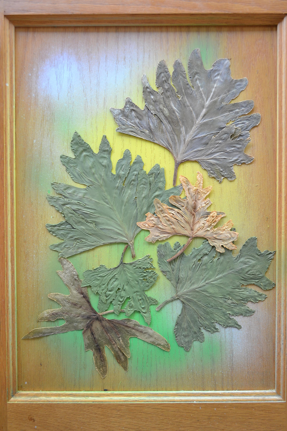 A door of a wooden cabinet with dried pressed leaves of Philodendron different colors. Pressed Flower Craft.