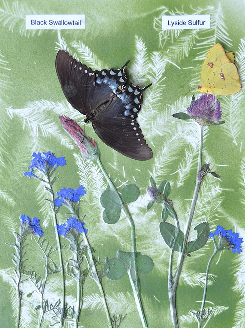 Wild flowers with butterflies #2