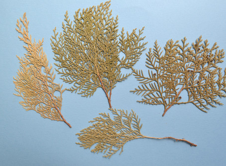 How to create the seascape on the Pressed Flower Craft. Corals.