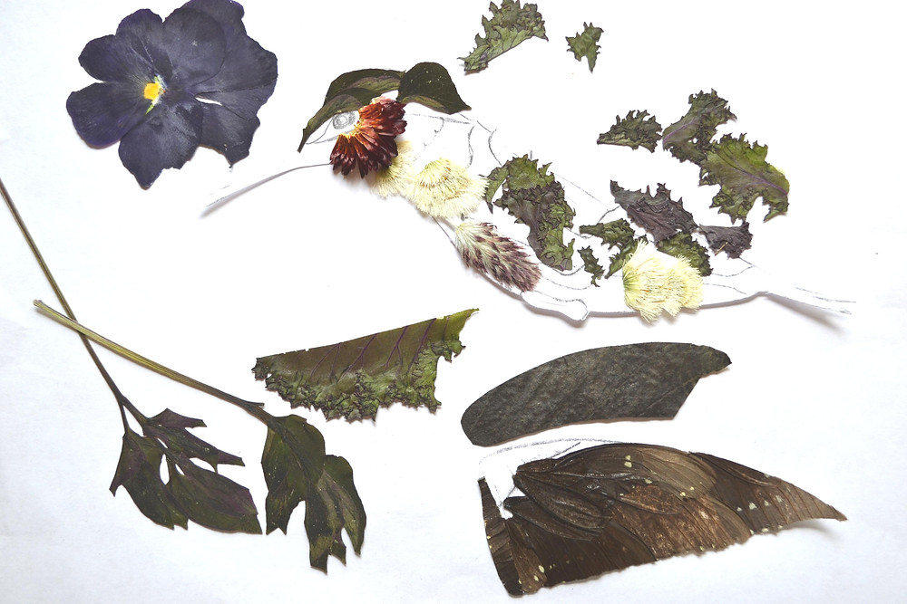 Dried pieces of plants on the piece of paper with figure of Hummingbird for Pressed Plant Art.