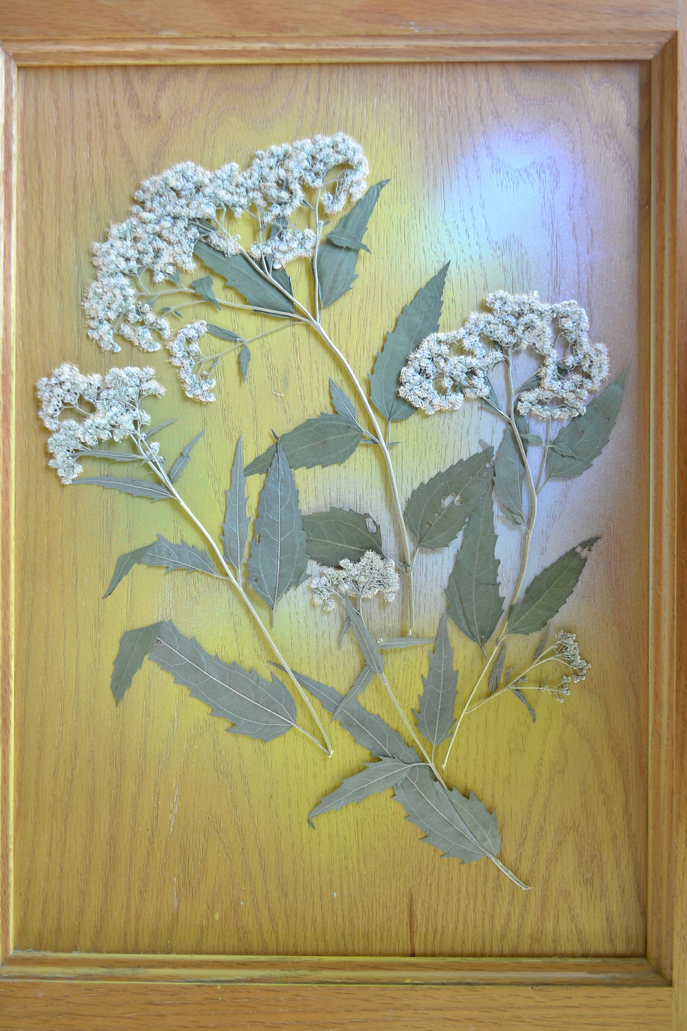 A door of a wooden cabinet with dried pressed plant. Pressed Flower Craft.
