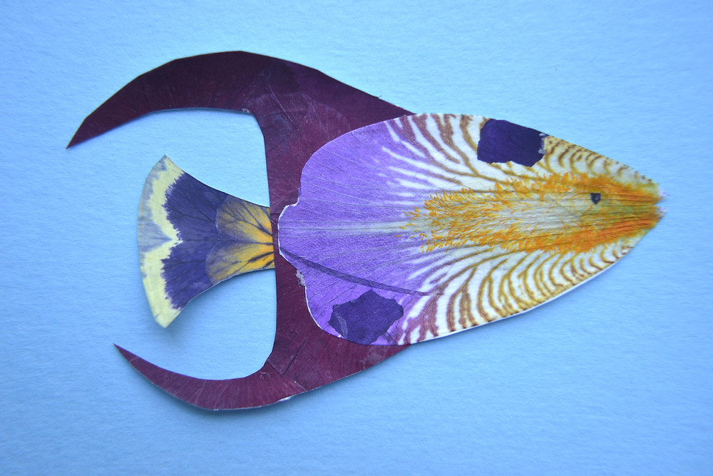 Fish for Pressed Plant Collage is made of dried under press petals of Iris, Pansy, and Butterfly bush.