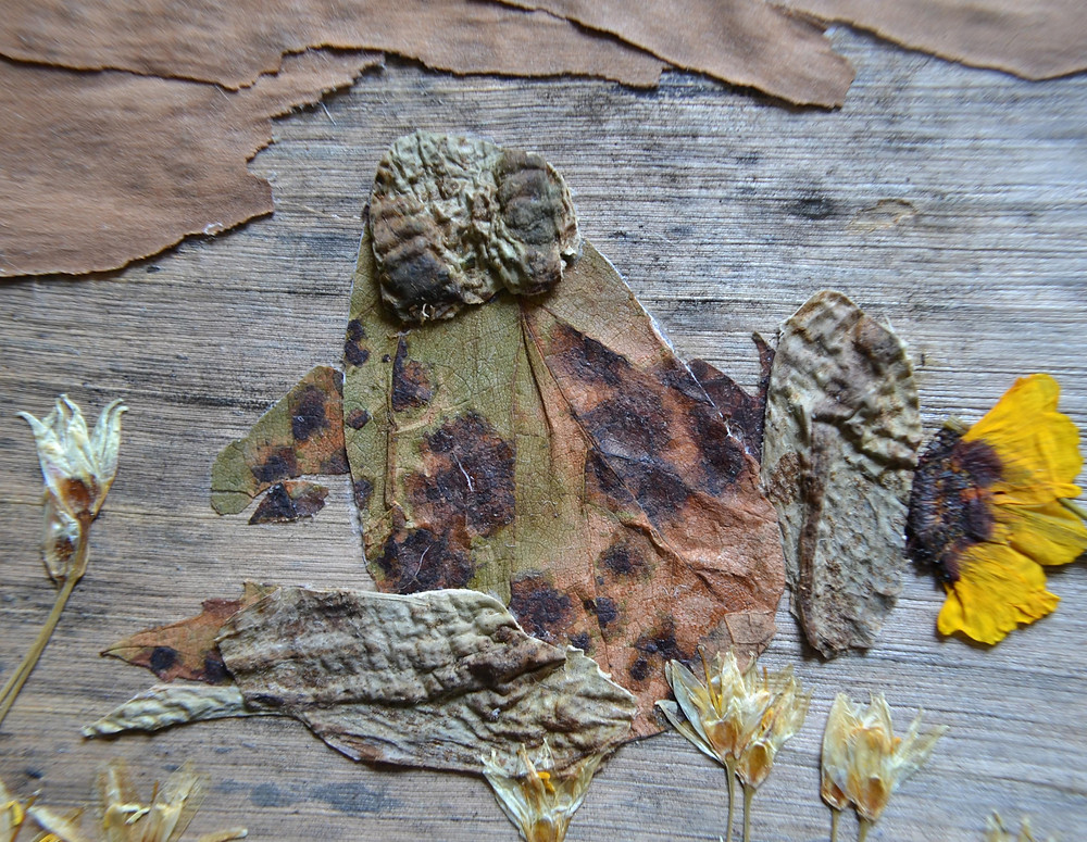 Fragment of the Pressed Plant Art with the close-up frog sitting on a road.