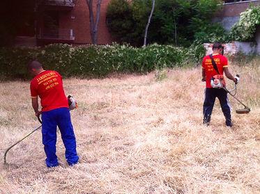 Jardineros Madrid