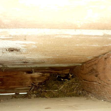 A qui est ce nid ?