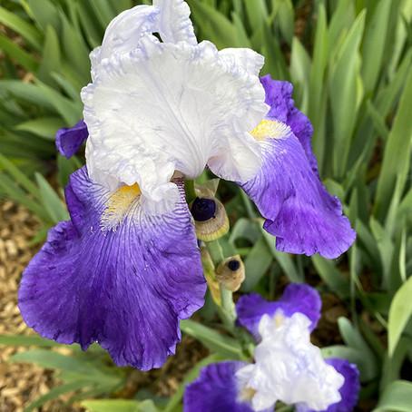 De belles fleurs de saison