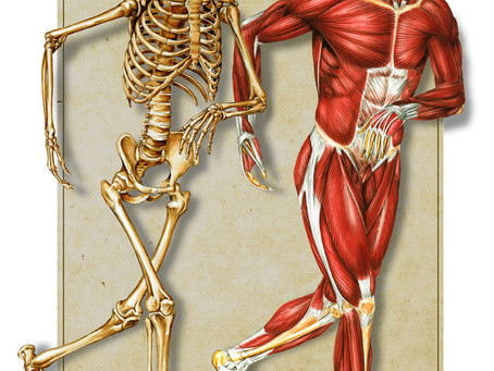 Magnesium: A vital mineral for your bones and muscles.