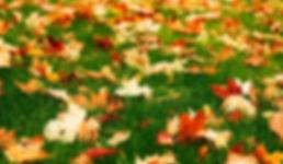fall lawn pic.jpg