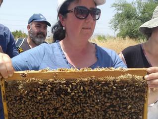 דבורים בגינה