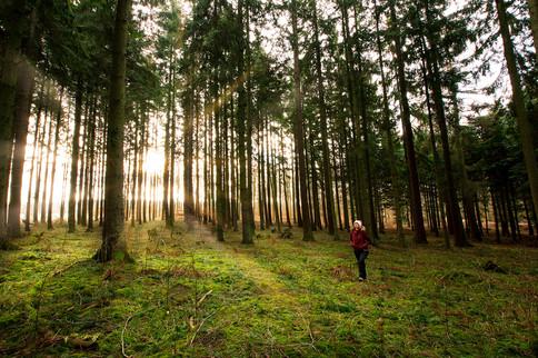 Ledreborg Forest, Denmark