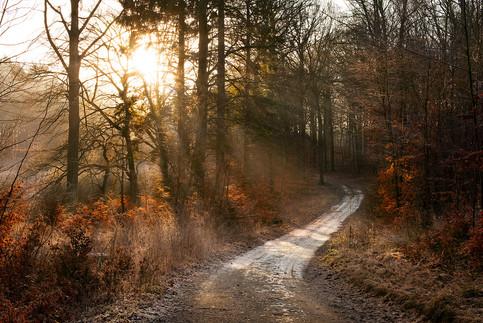 Autumn Sun, Denmark