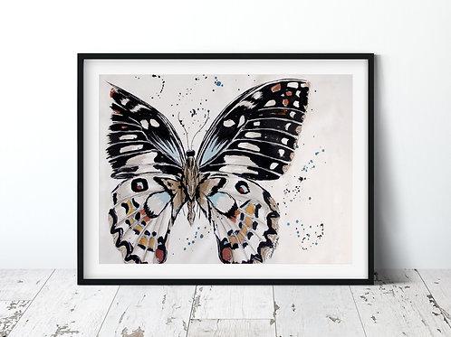 Butterfly   Unframed Print