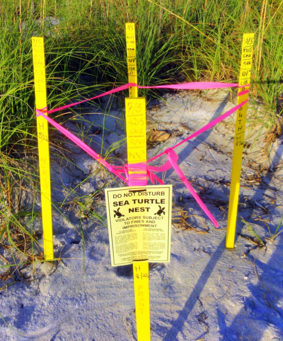 Sea turtle nest staked