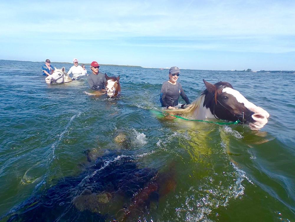 Swimming on a Horse ~ Anna Maria Island