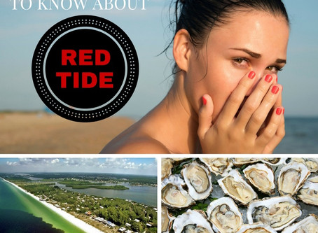 Red Tide - Everything You Need To Know