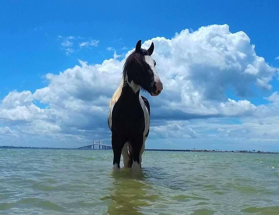 Horseback Riding ~ Anna Maria Island, Florida