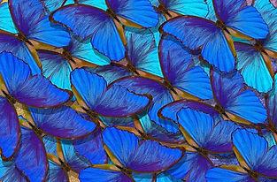 Biomimicry-Companies-Teaser.jpg