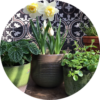 Garden Bleau Plants Background