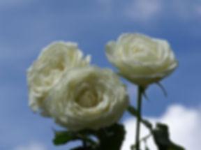 3-rosas_cielo.jpg