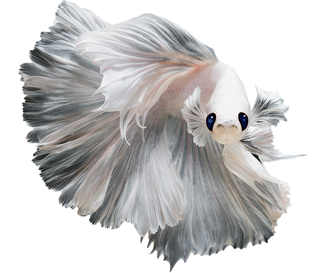 White_Fish_Isolated_Eyes.png