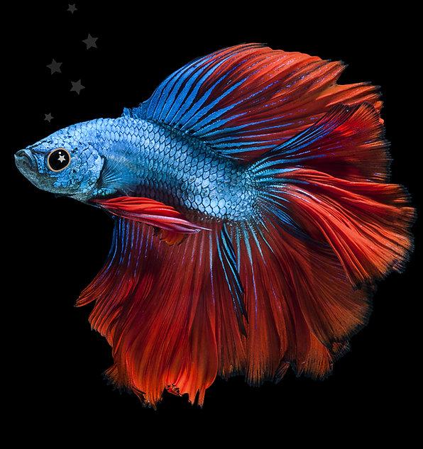 fish.jpg