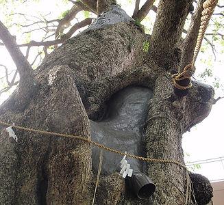 樹木治療2.jpg
