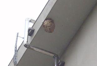ハチの巣駆除.jpg