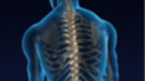 inside-spine-istock-0000083.jpg