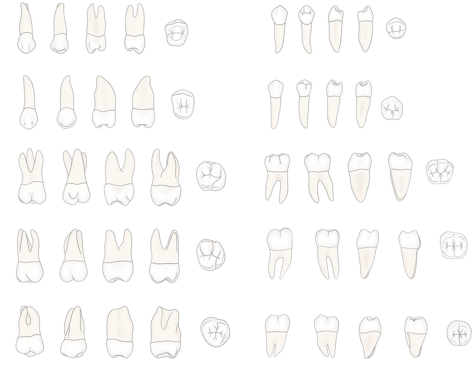 Posterior_Secondary_Dentition%25203_edit