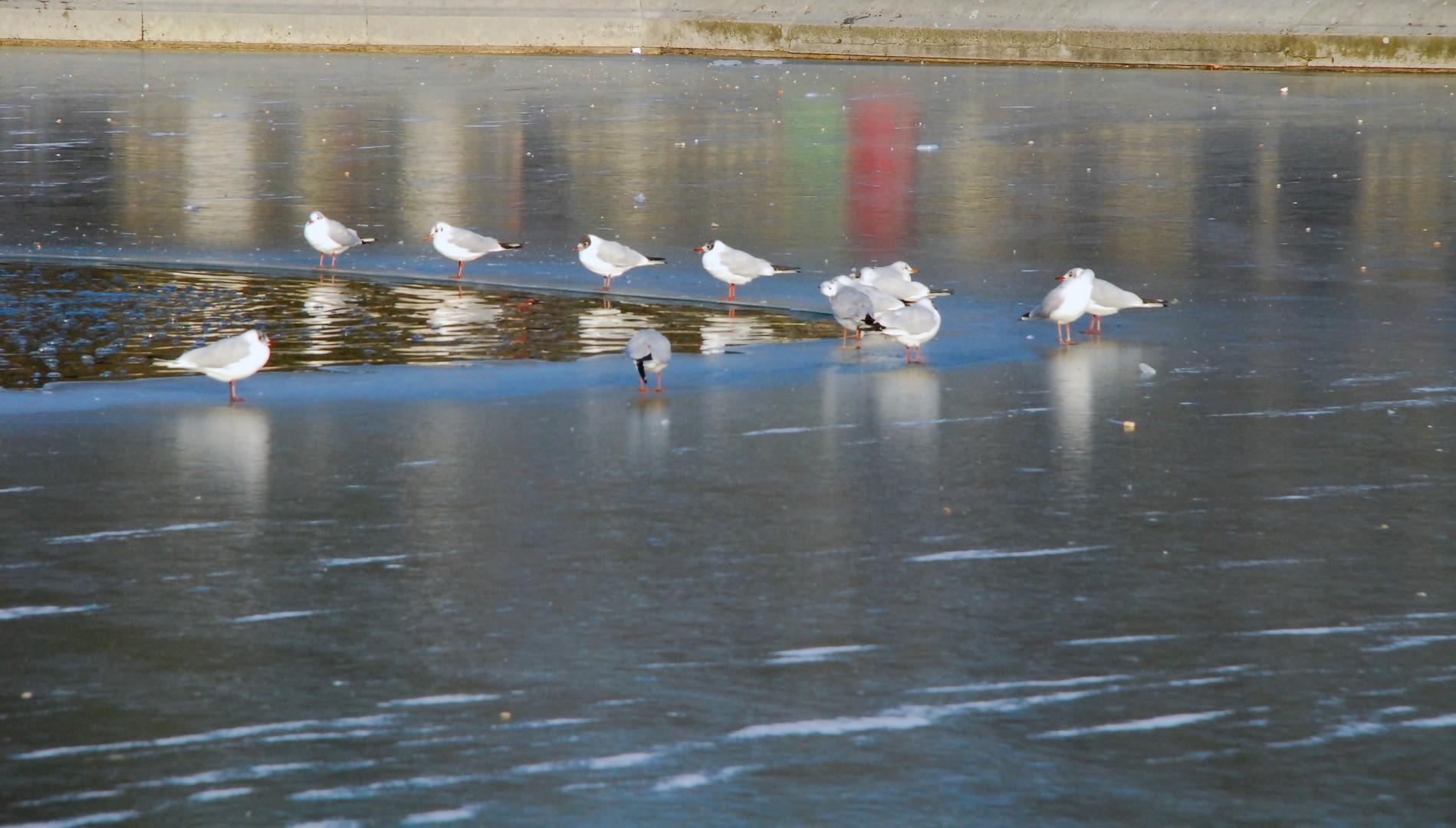 092_Elisabeth-Mazoyer_autour de l'eau