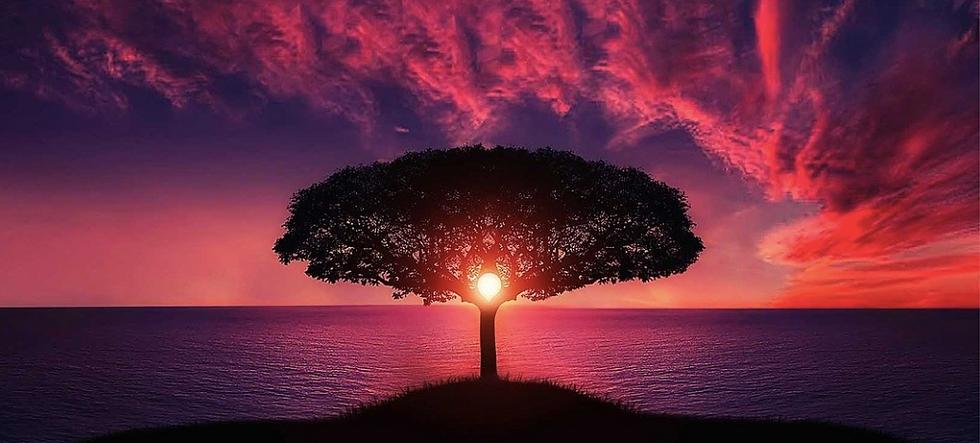 arbre&couché_soleil.png