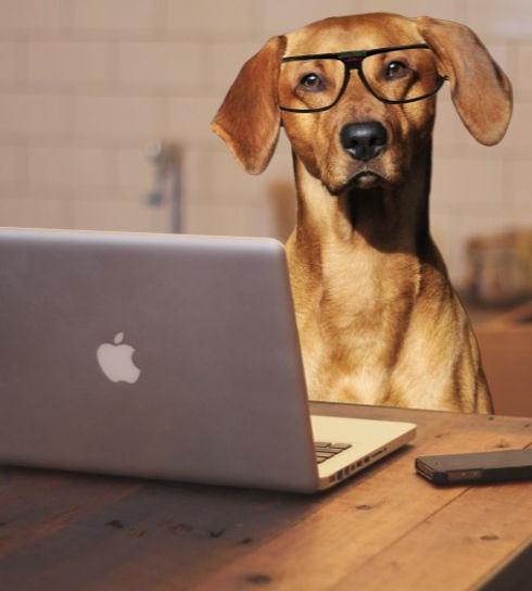 dog-using-laptop-computer_edited.jpg