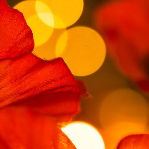 Bokeh poppies